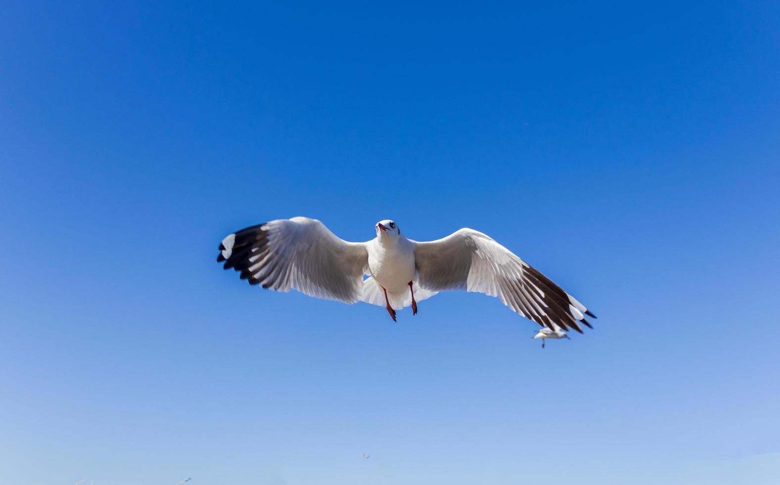 mouettes volant dans le ciel bleu photo
