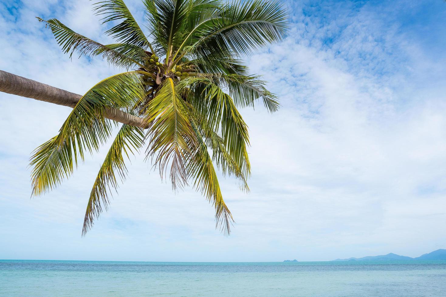 plage tropicale avec palmier photo