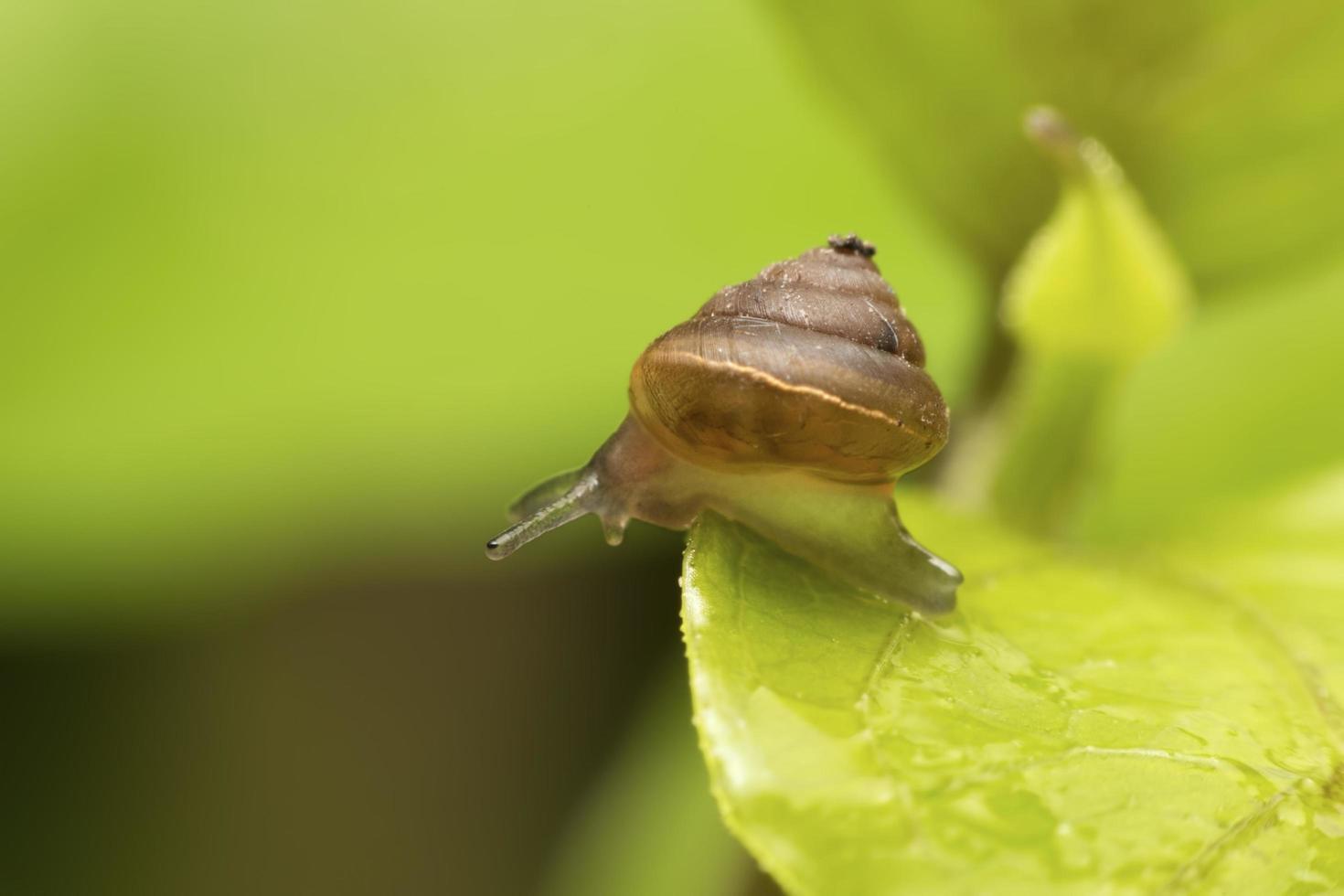escargot sur feuille verte photo