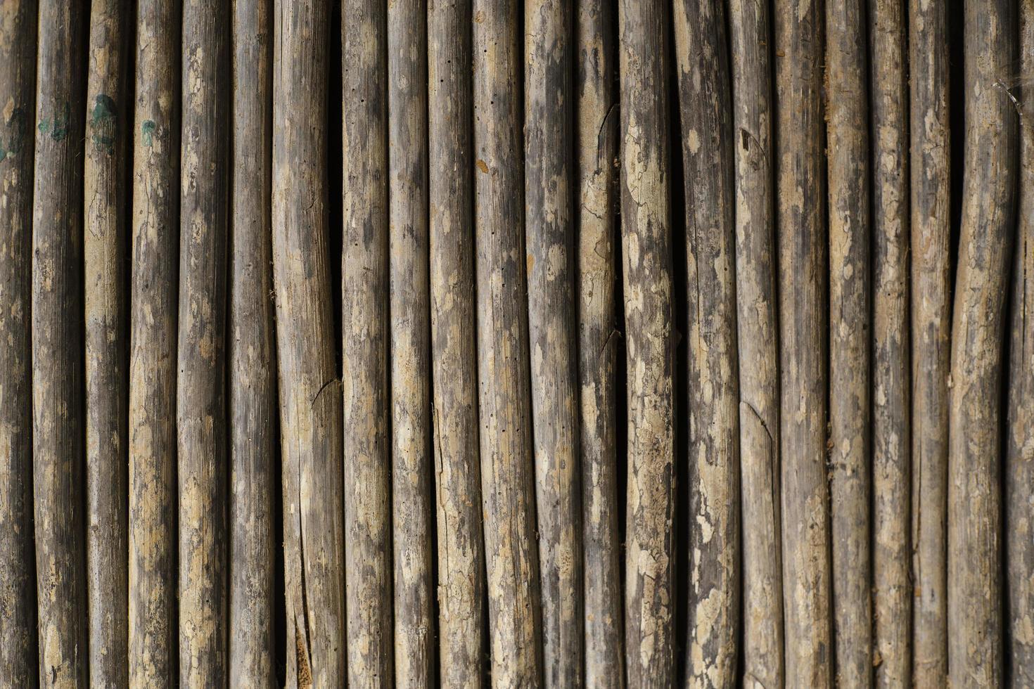 détail des arbres de canne sauvage photo