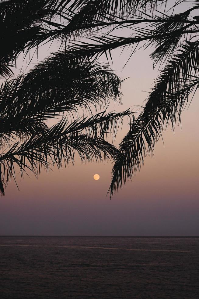 silhouette de palmiers devant le coucher du soleil photo