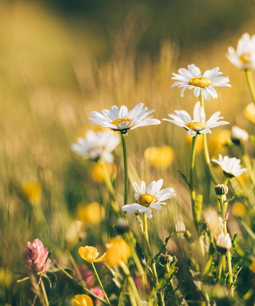 fleurs blanches et jaunes photo