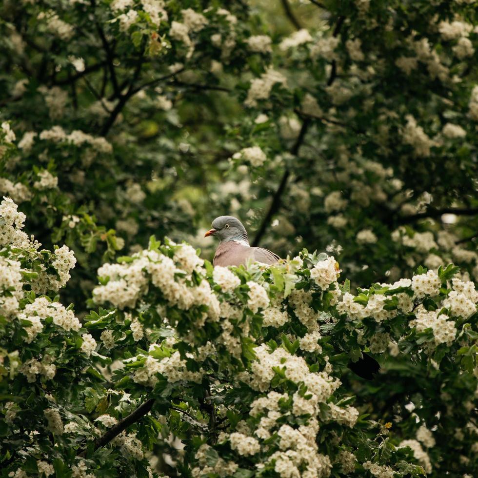 oiseau blanc et brun photo