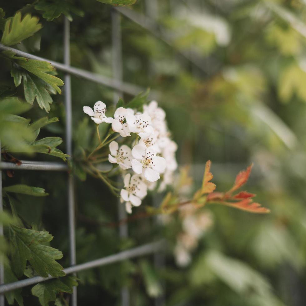plantes fleuries dans la nature photo
