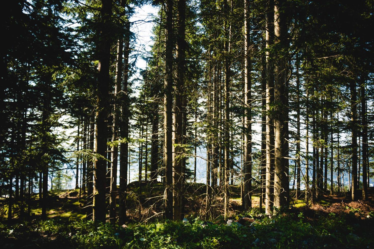 arbres verts en été photo
