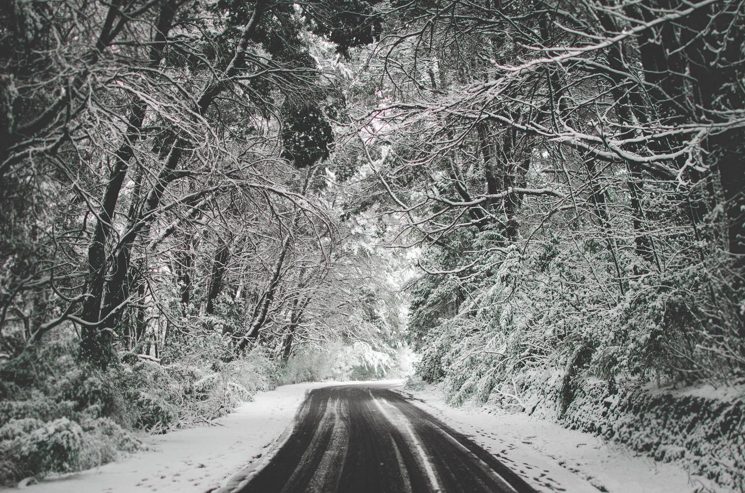 route enneigée vide photo