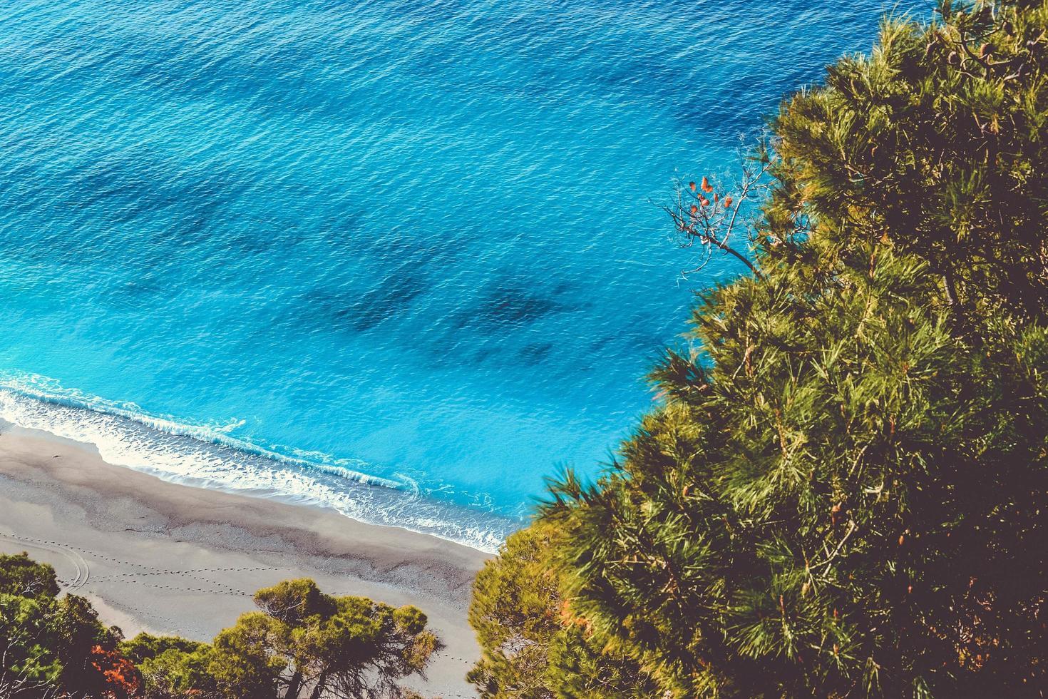 arbres de l'océan donnant sur l'eau photo