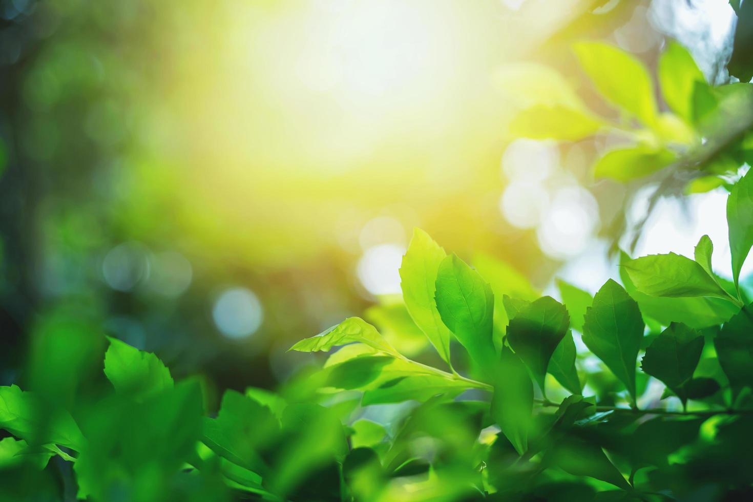 feuilles vertes et lumière du soleil photo