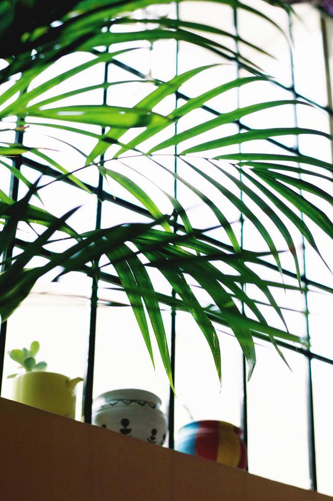 plante verte à côté de la fenêtre photo