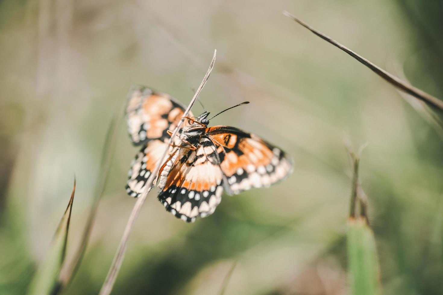 papillon brun blanc et noir sur plante photo