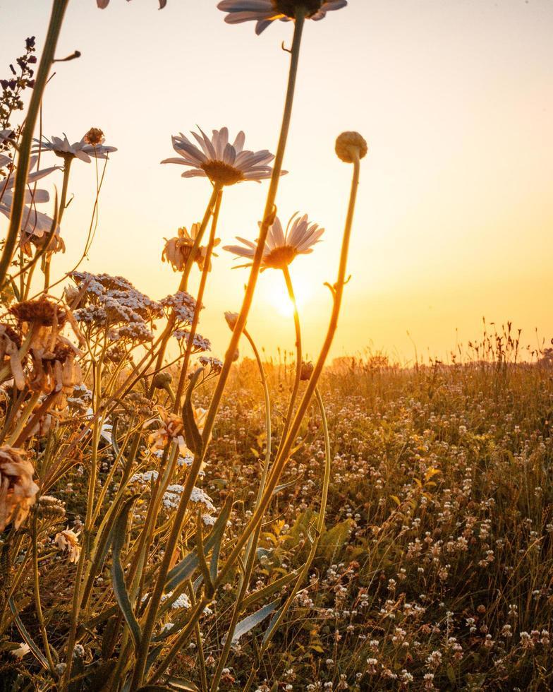 lever du soleil sur le champ photo