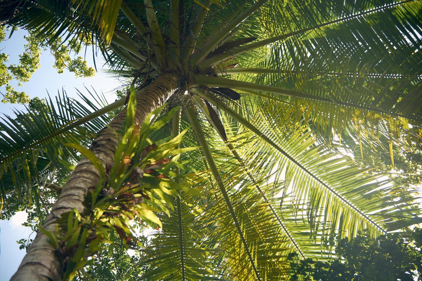 palmiers ensoleillés photo