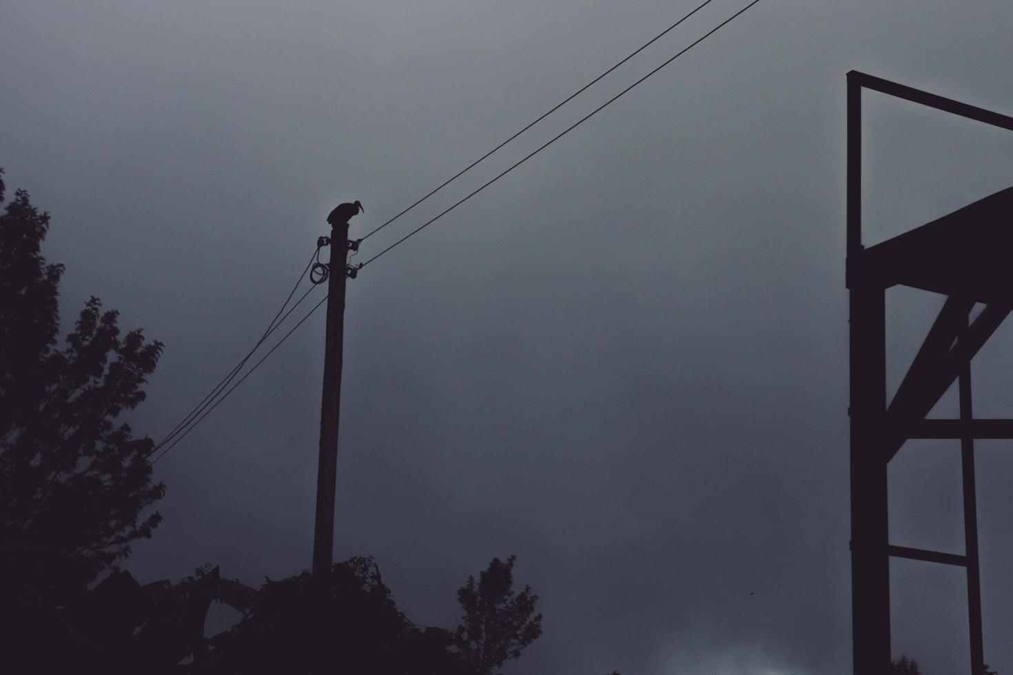 silhouette d'arbres, d'oiseaux et de lignes électriques photo