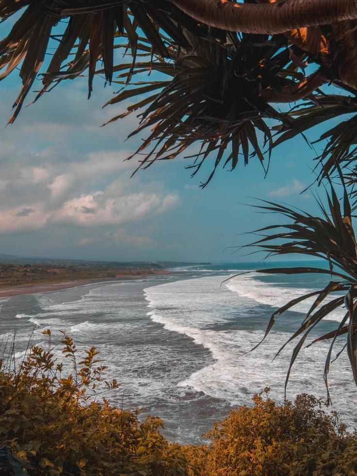 palmiers près de la mer photo