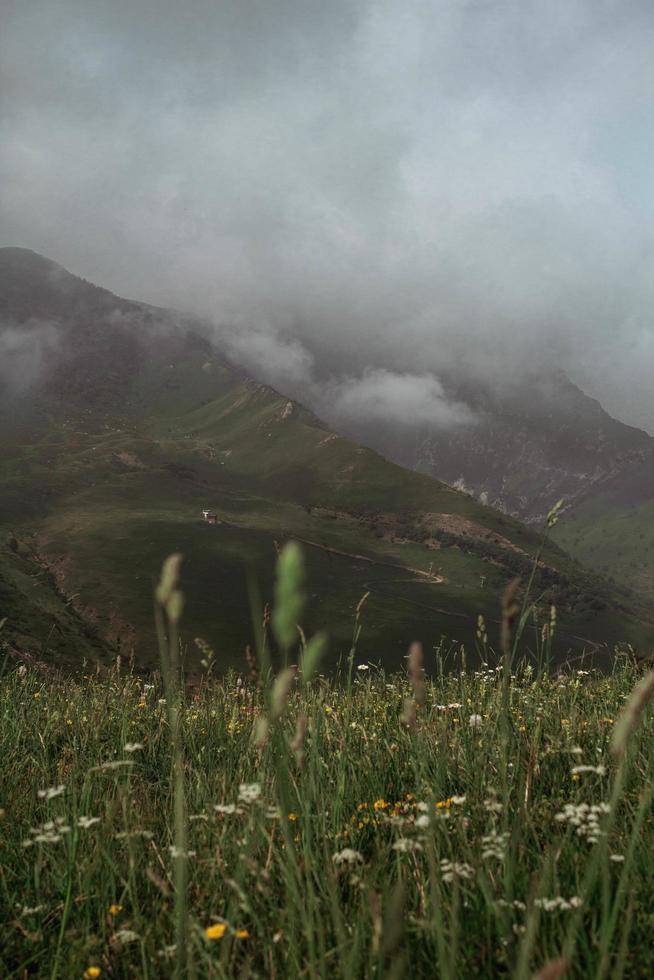 champ de fleurs à côté de la montagne. photo