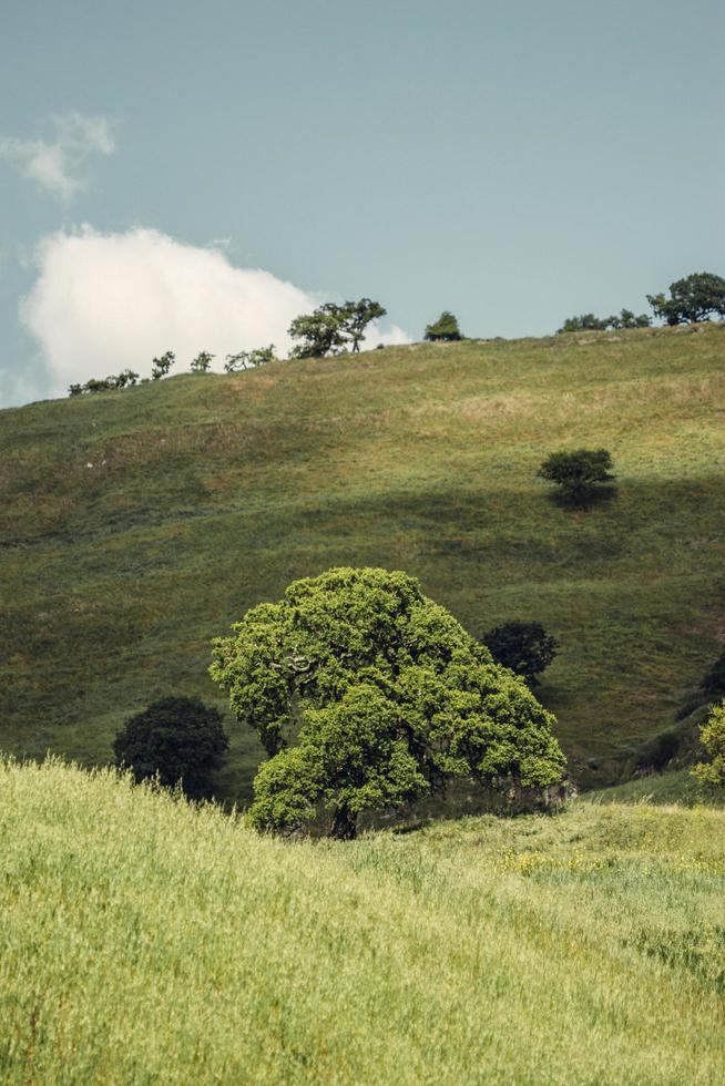 champ herbeux vert photo