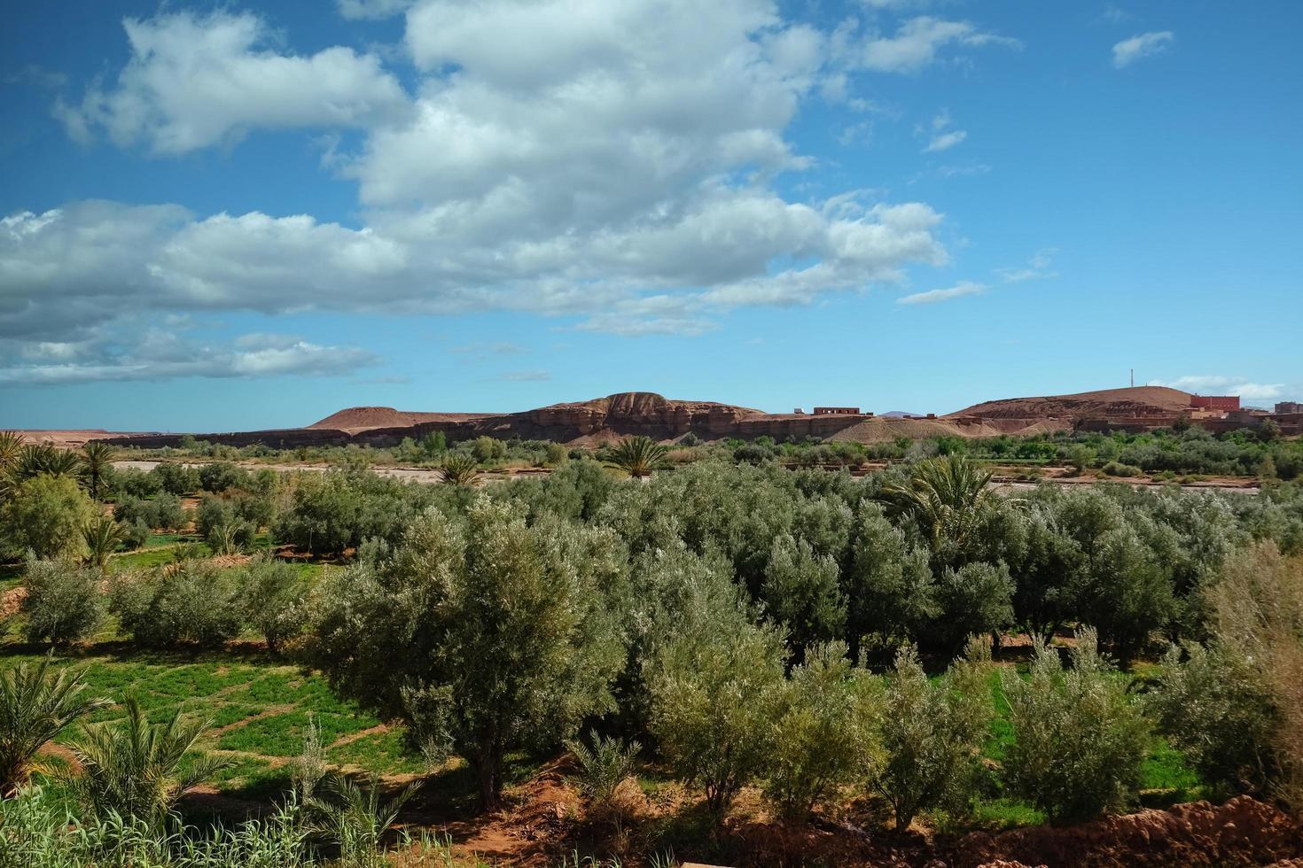 vue paysage du champ de culture au maroc. photo