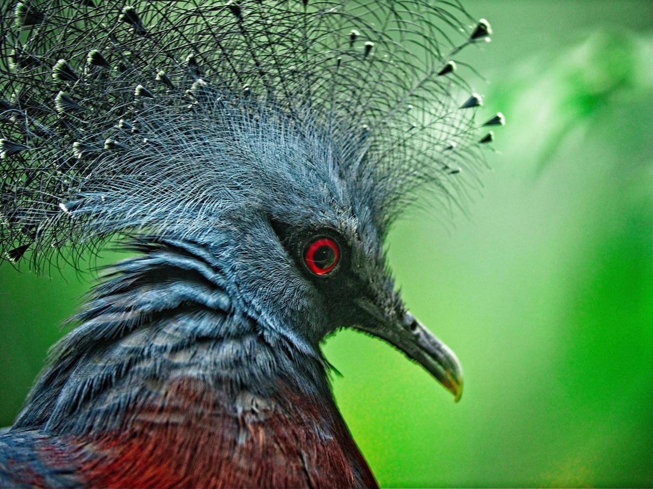 gros plan d'oiseau photo