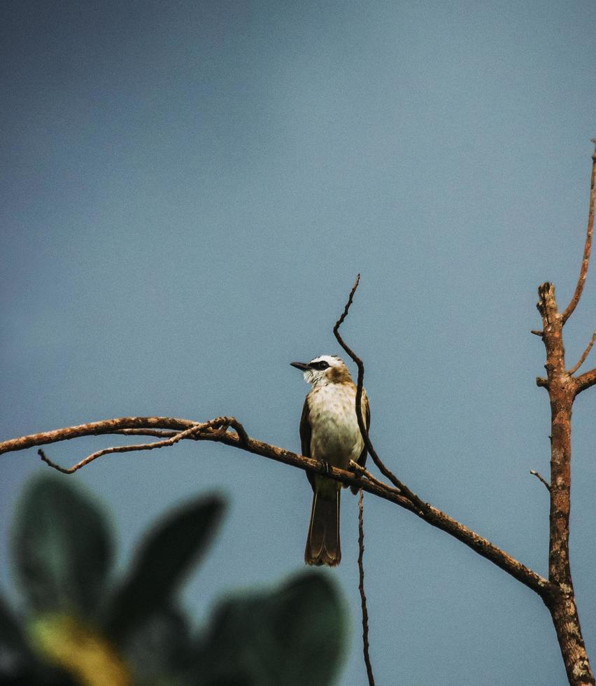 oiseau blanc et brun sur une branche photo