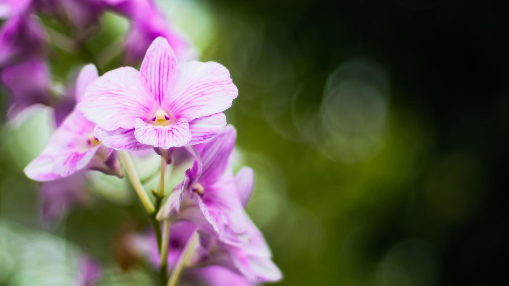 fleur d'orchidée pourpre sur fond vert photo
