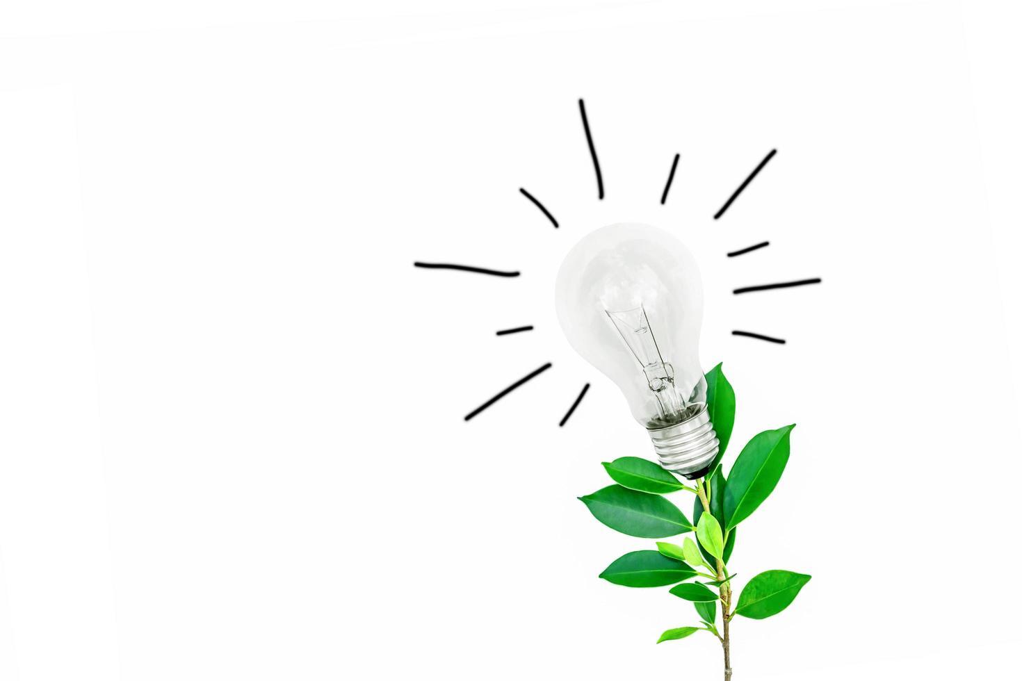 arbre avec une ampoule sur fond blanc photo
