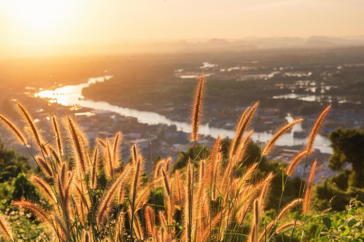 champ d'herbe de blé grand naturel photo