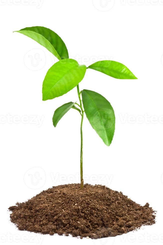 jeune arbre vert photo