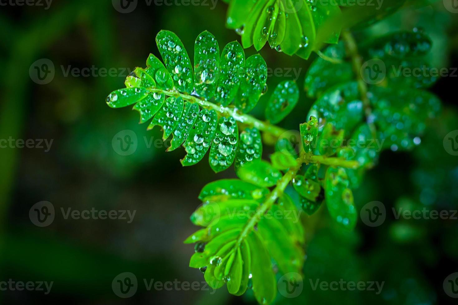 gouttes d'eau sur l'herbe verte. macro photo