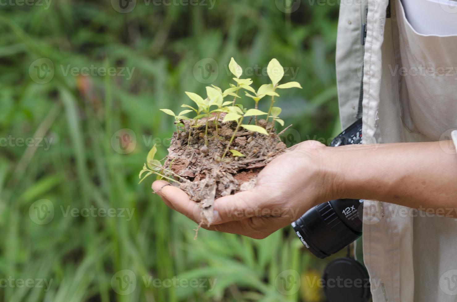 semis de plantes photo