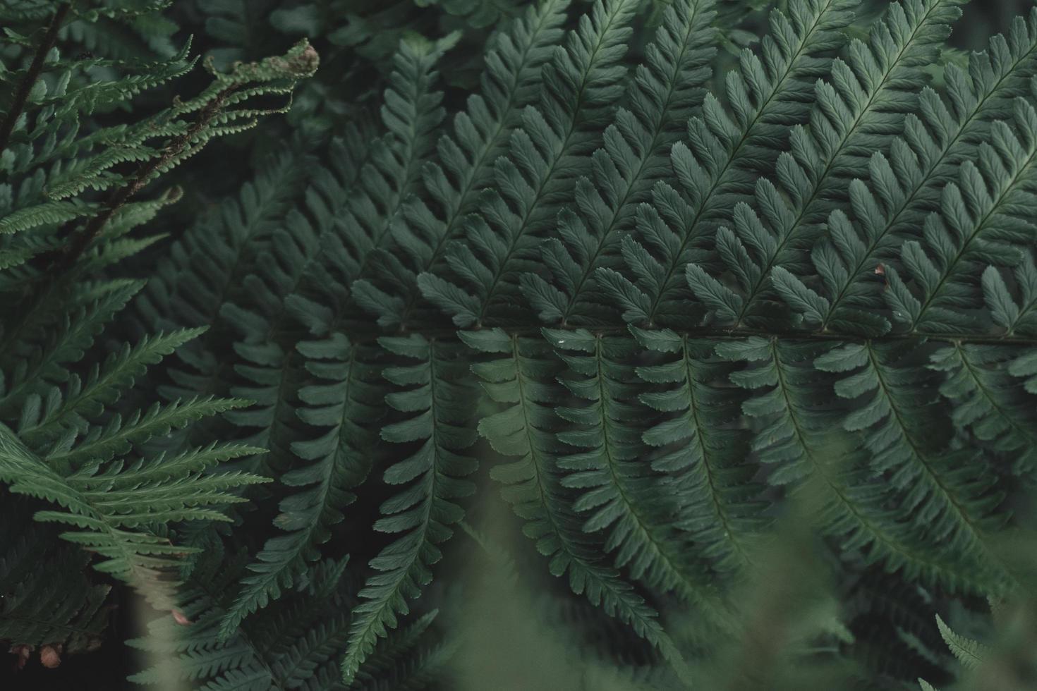frondes de fougère verte photo