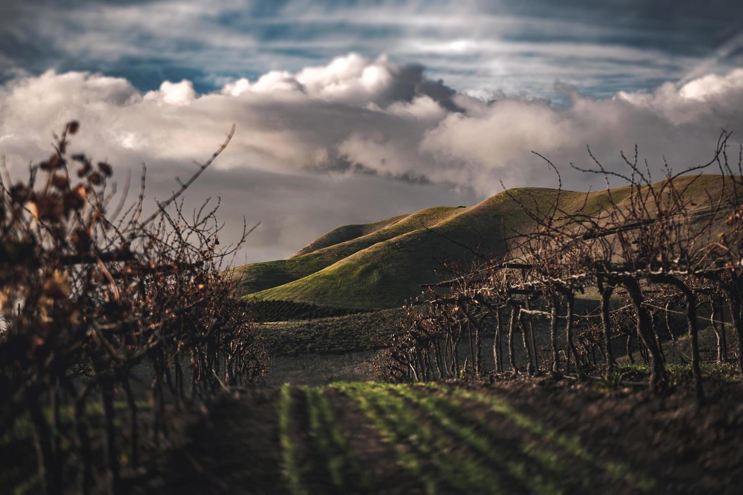 collines vertes par temps nuageux photo