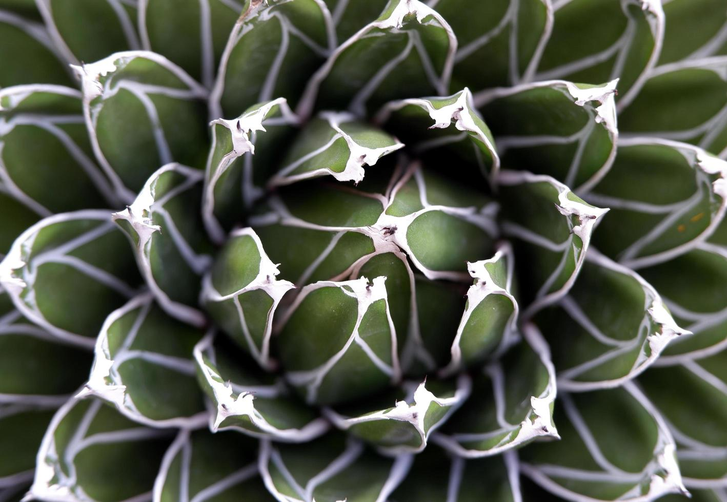 gros plan, de, plante succulente photo