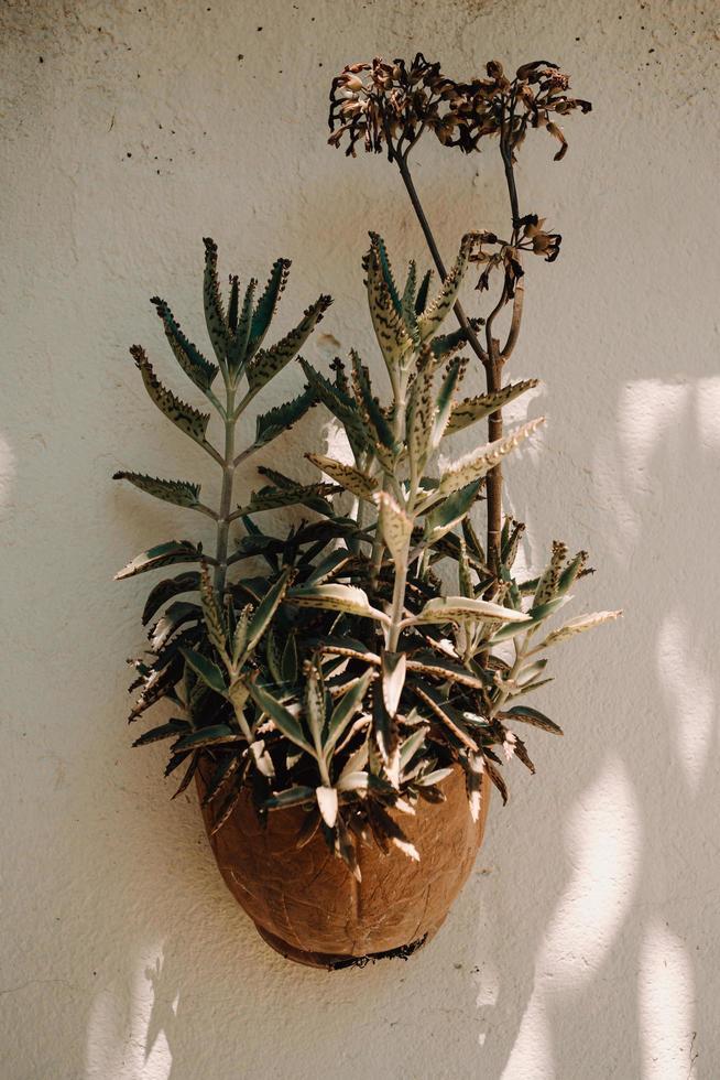 pot avec une fleur photo