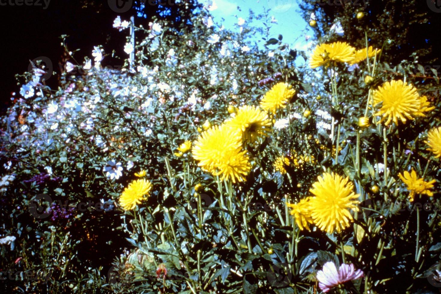 fleurs dans le jardin photo