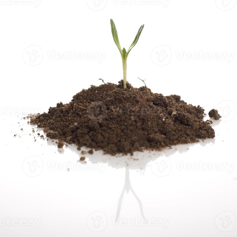 plant de plante verte photo