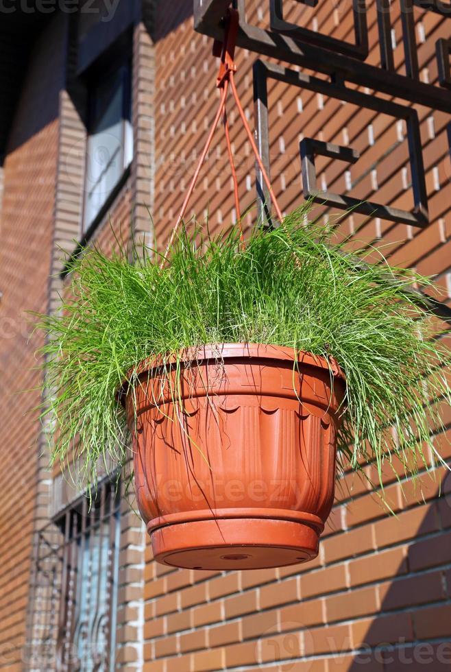 pot avec de l'herbe photo