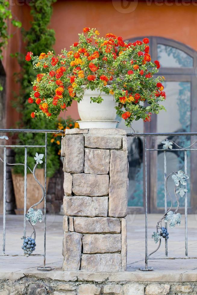 pots de fleurs et plantes d'intérieur sur le balcon photo