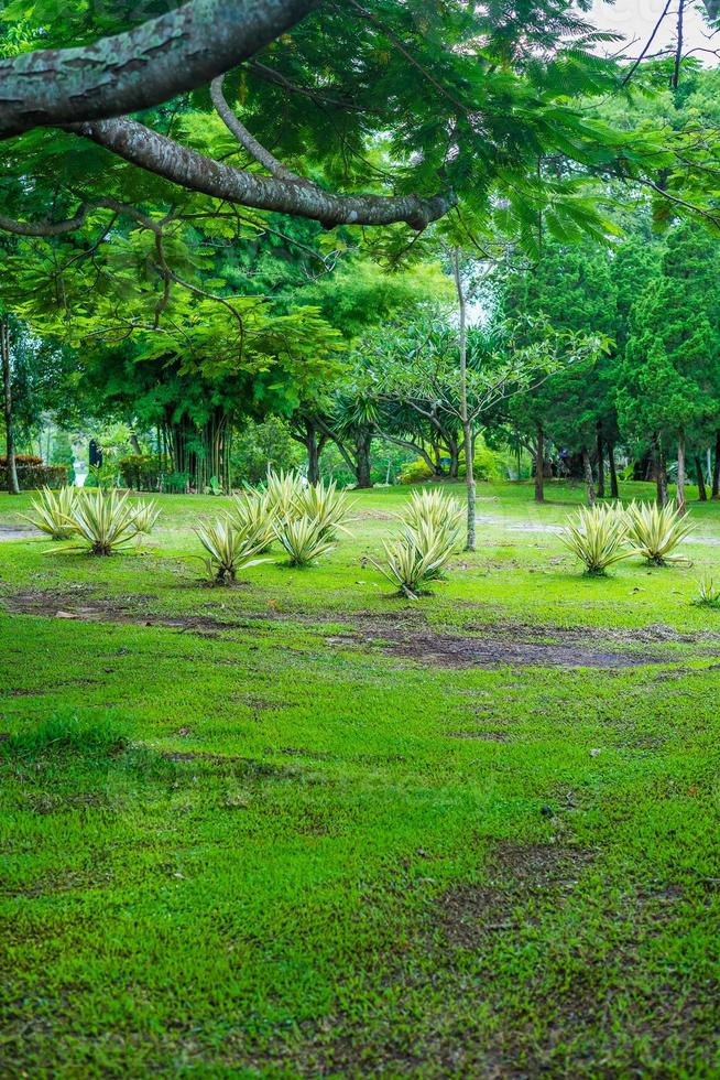 arbre vert jardin paisible photo