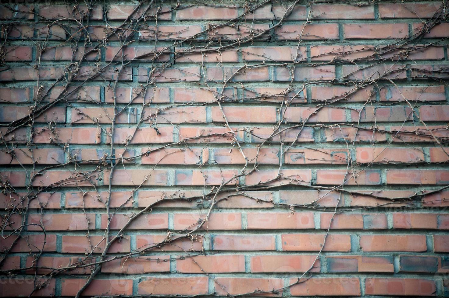 mur de briques photo