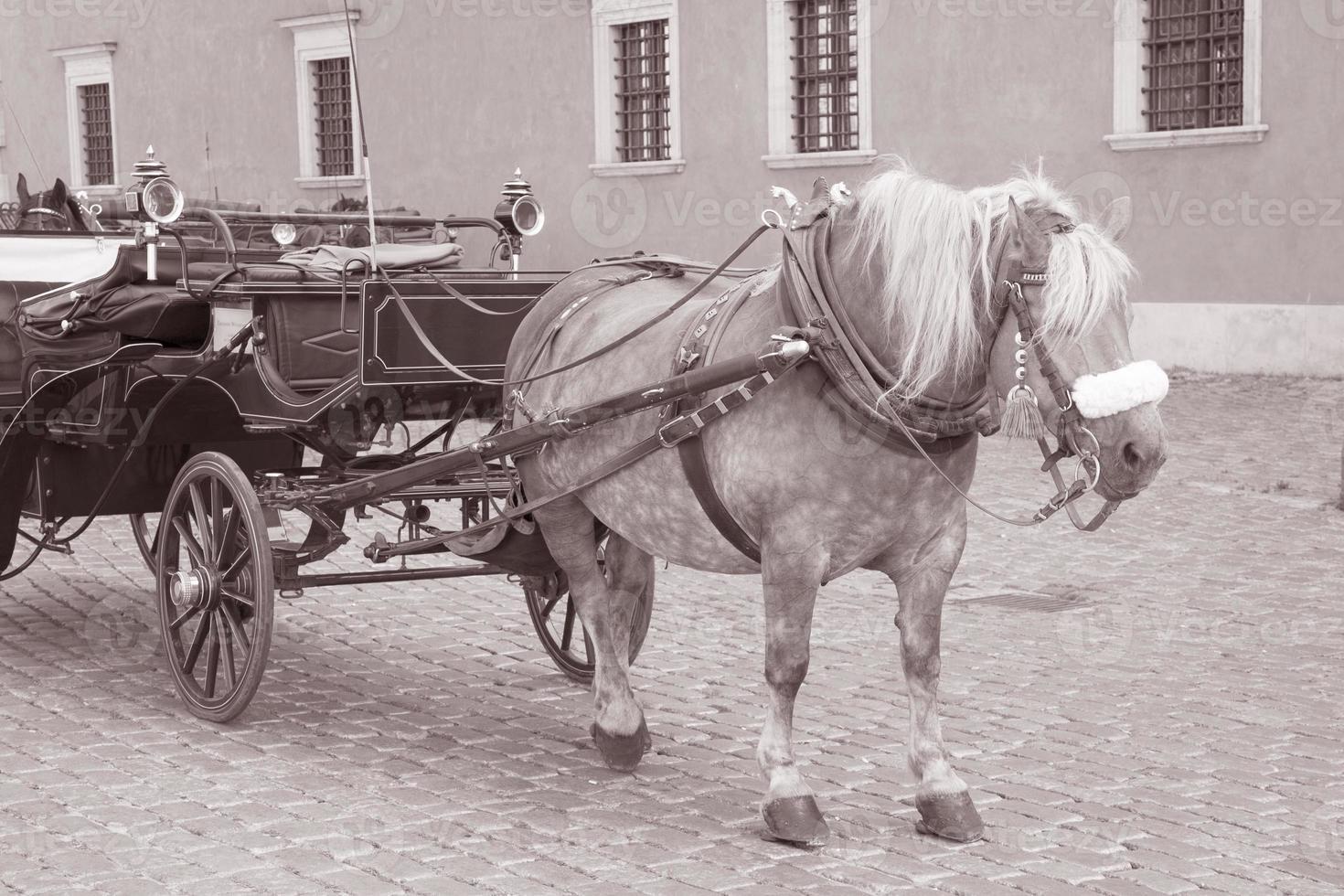 cheval et calèche sur la place du château; Varsovie photo
