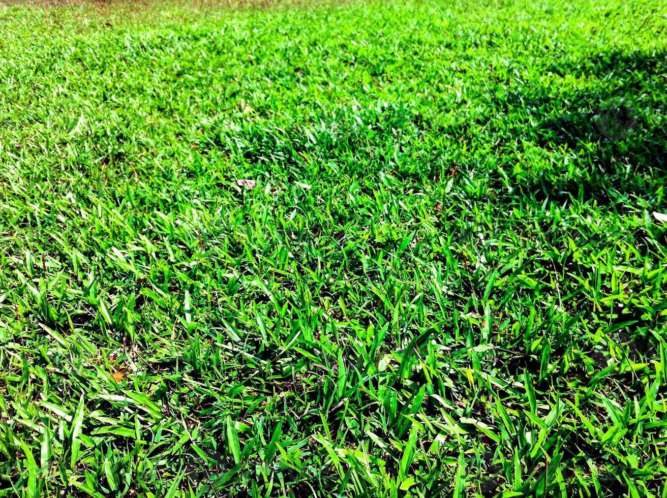 pelouse verte dans le jardin magnifique photo