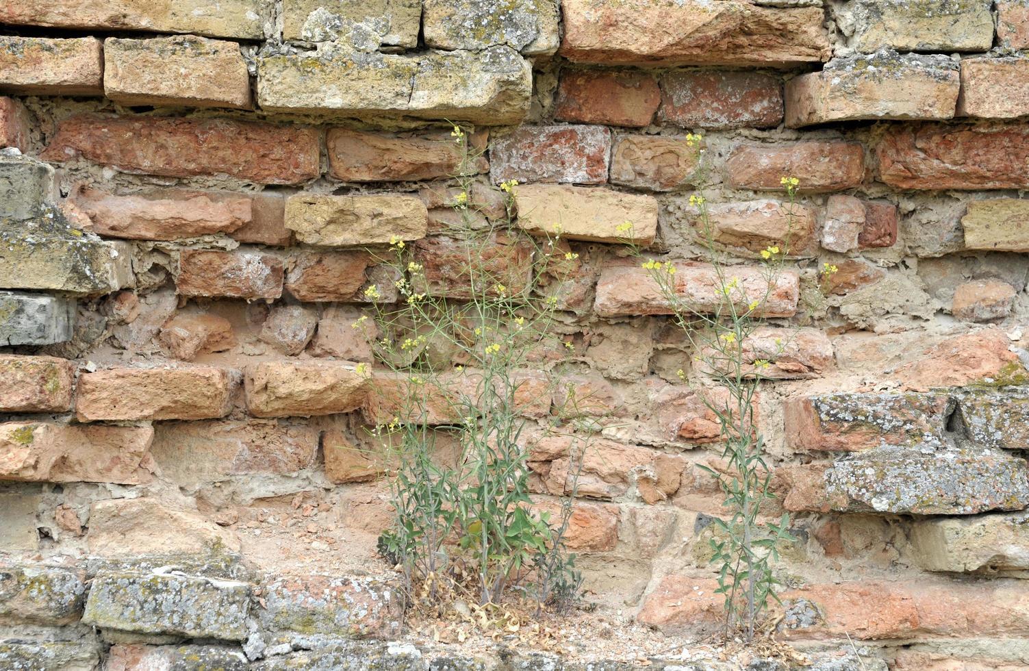 vieux fond de texture de mur de brique photo