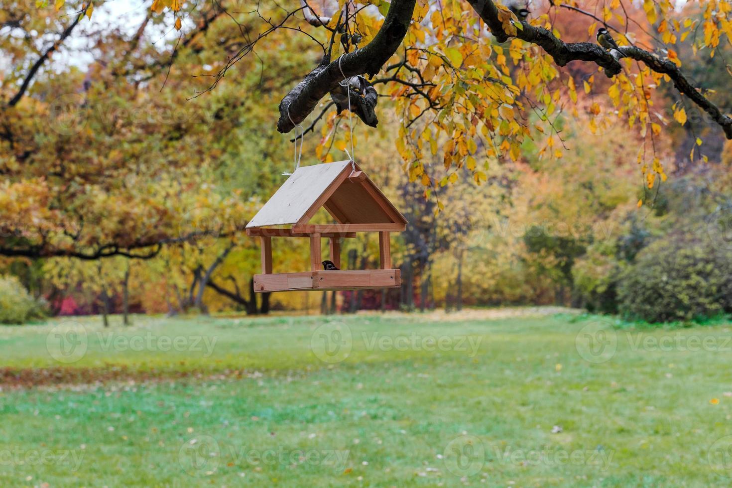 mangeoires pour oiseaux dans le parc d'automne. photo