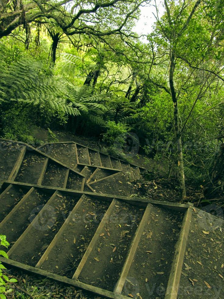 escaliers dans la forêt tropicale photo