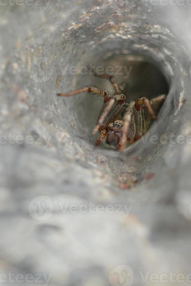 toile d'araignée avec araignée photo