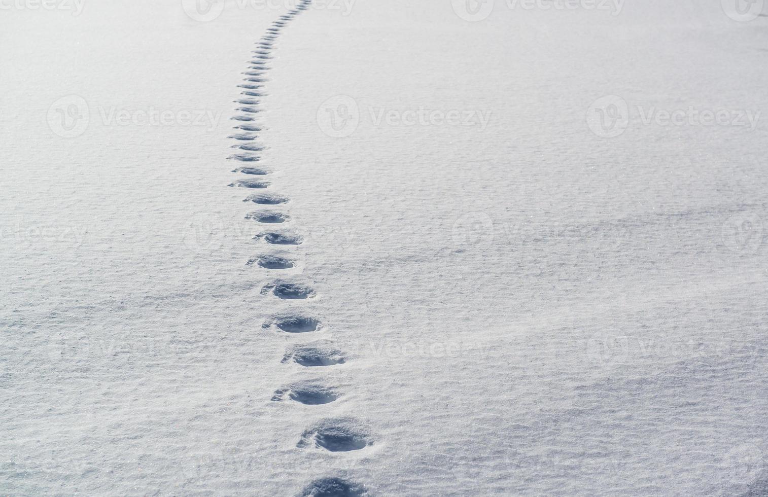 traces dans la neige photo