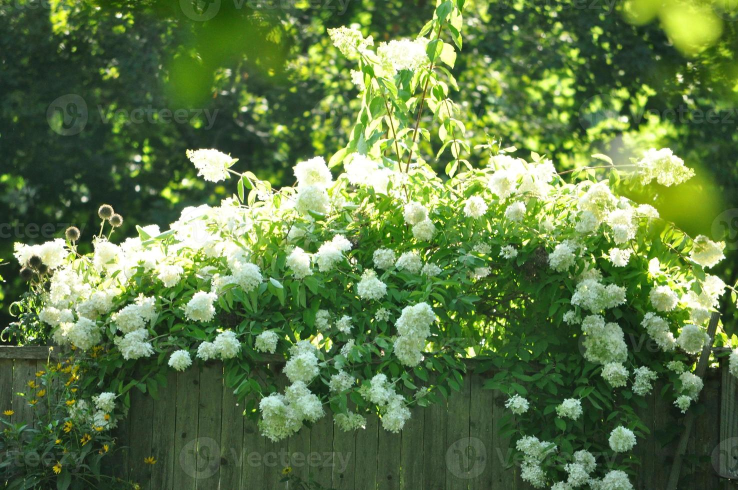 fleurs en été photo