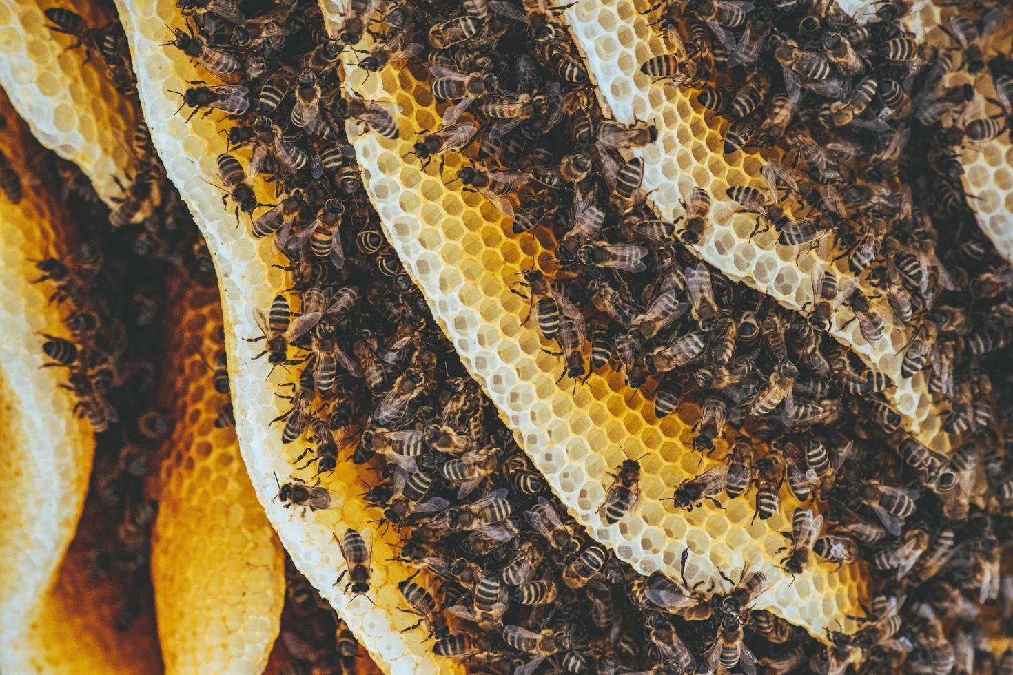 abeilles sur nid d'abeille photo