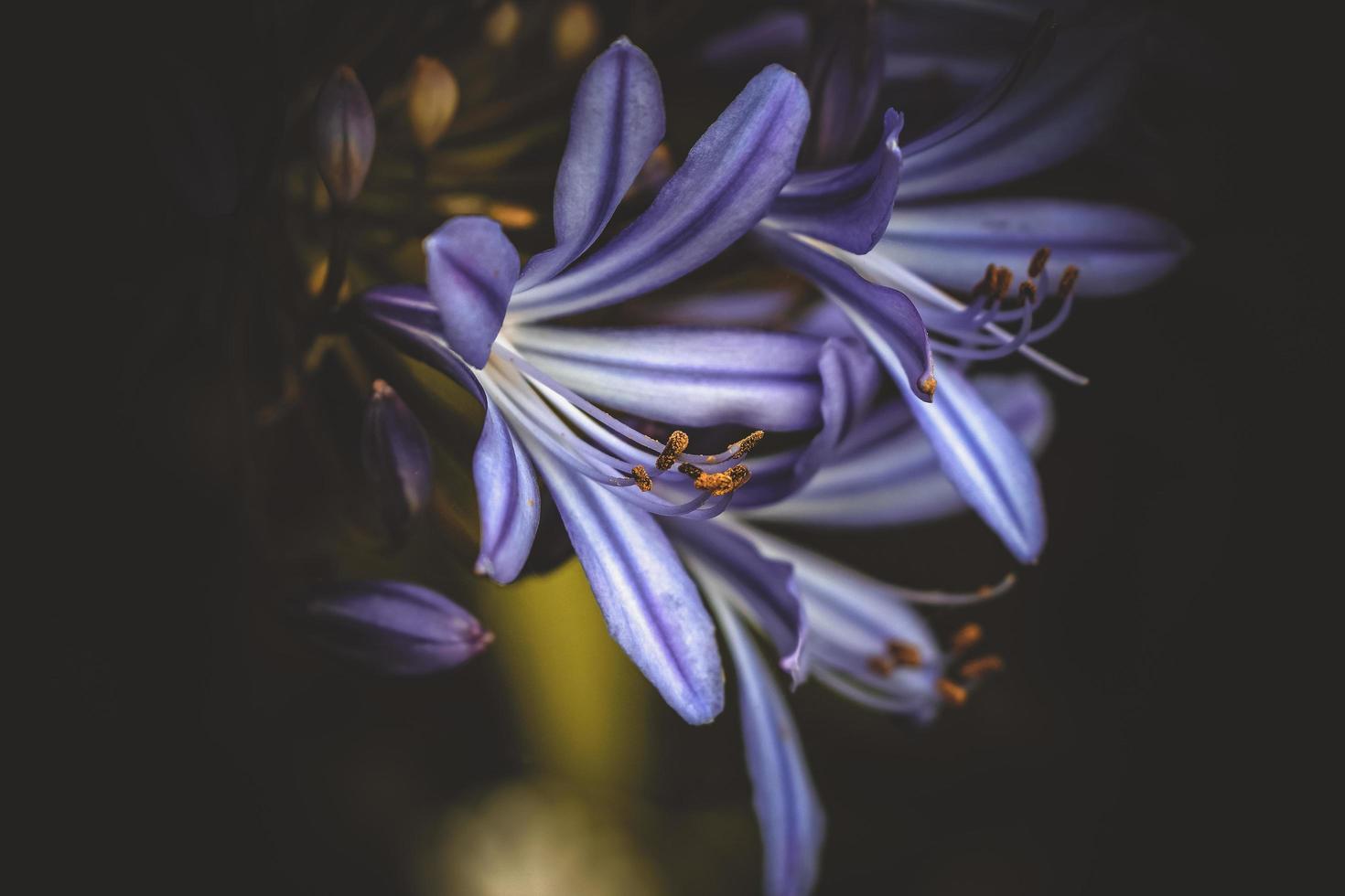 gros plan de fleur pourpre photo