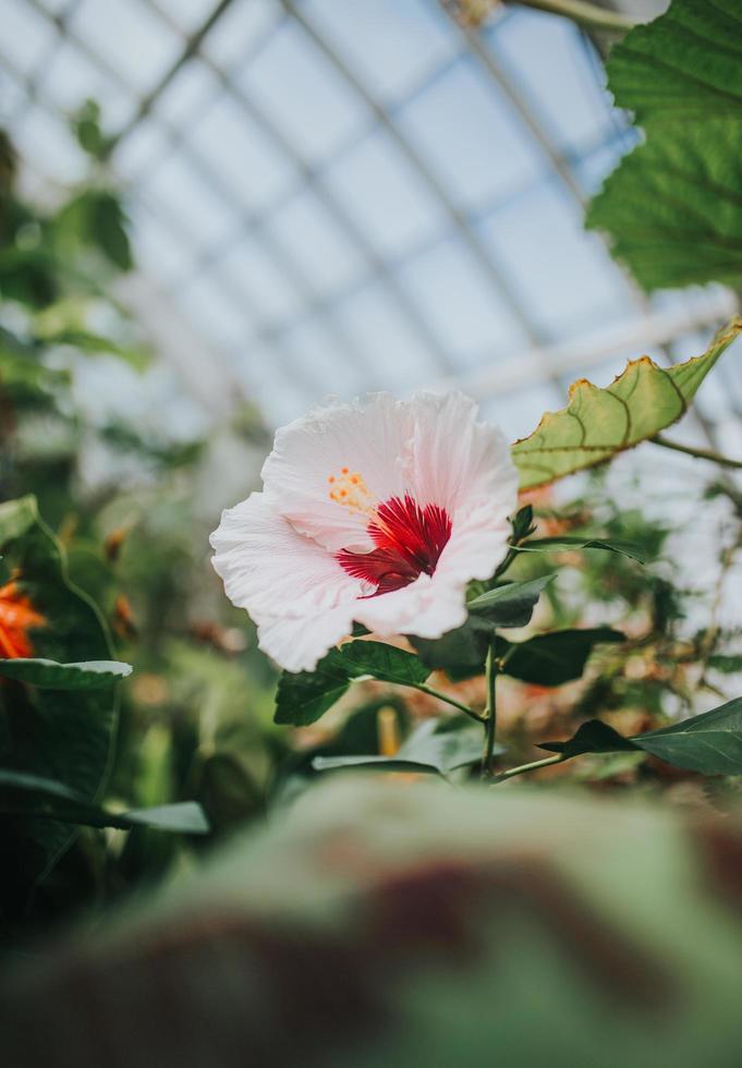 fleur pétale blanche et rouge photo